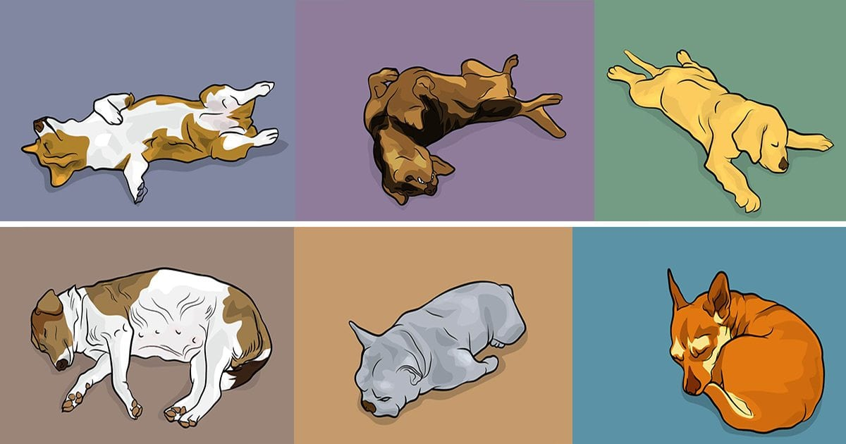 dog_sleeping_positions_featured